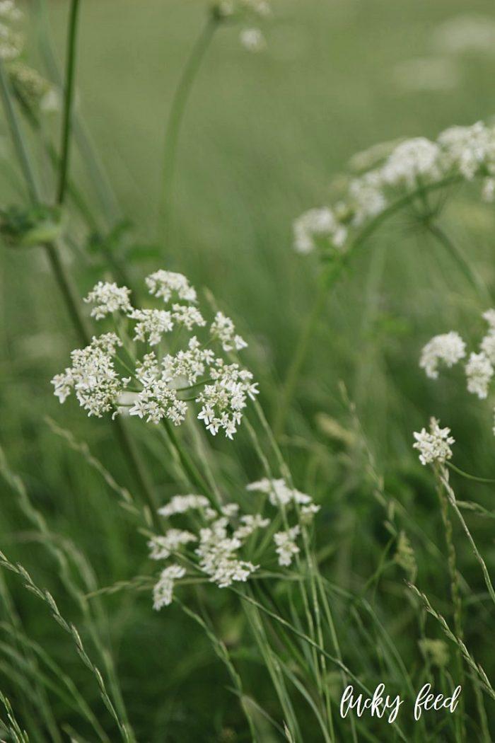 Midsommar, Wiesenblumen, Blumenstrauß Wiesenblumen, Sommer